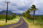 HAWAII - a windswept road on the way to Volcanoes National Park.